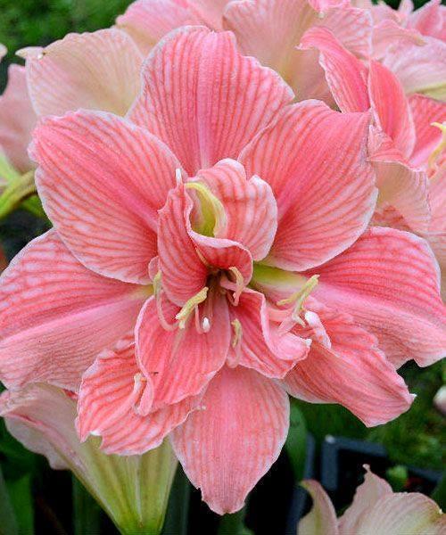 Tr s jolie fleur - Coloriage fleur tres jolie ...